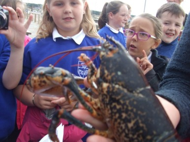 Trip to the Harbour- Burghead Primary School